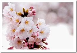 2011-03-28_100601